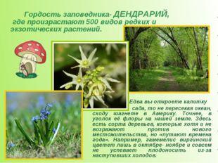 Гордость заповедника- ДЕНДРАРИЙ, где произрастают 500 видов редких и экзоти