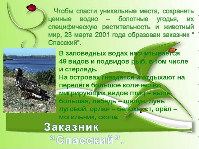 В заповедных водах насчитывается 49 видов и подвидов рыб, в том числе и стерл...