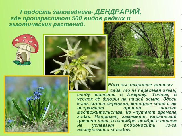 Гордость заповедника- ДЕНДРАРИЙ, где произрастают 500 видов редких и экзоти...