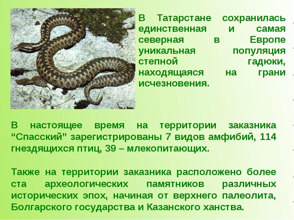 В Татарстане сохранилась единственная и самая северная в Европе уникальная по...