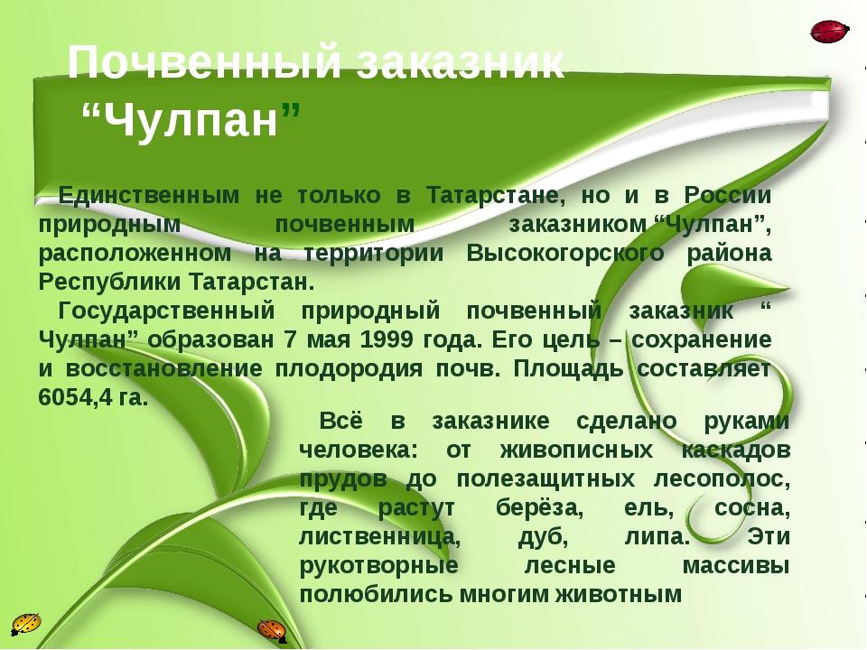 """Почвенный заказник """"Чулпан"""" Единственным не только в Татарстане, но и в Росс..."""