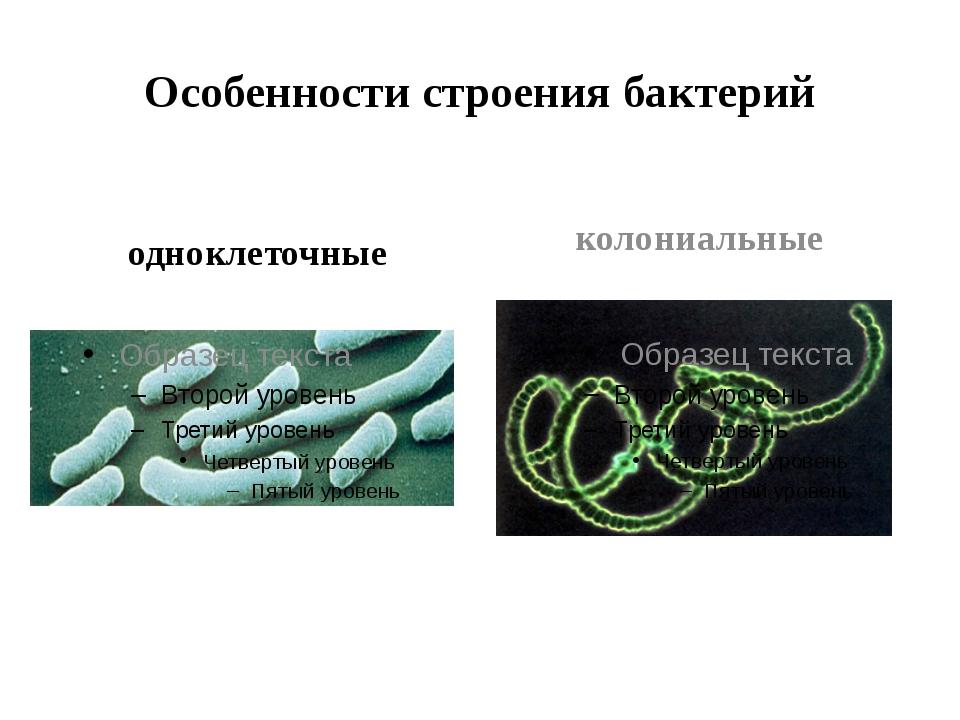 Особенности строения бактерий одноклеточные колониальные