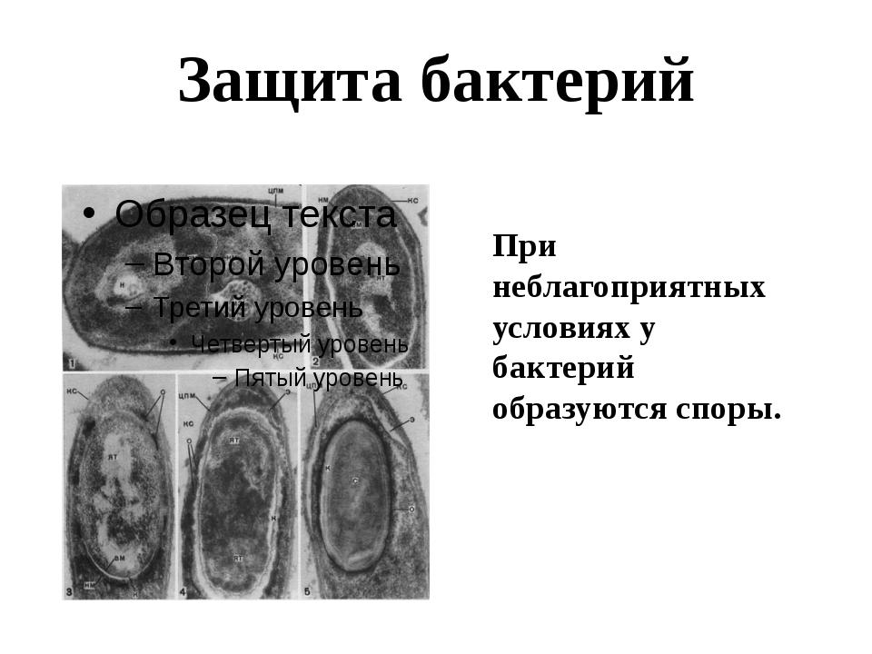Защита бактерий При неблагоприятных условиях у бактерий образуются споры.