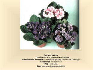 Паспорт цветка. Узамбарская, или африканская фиалка. Ботаническое название у