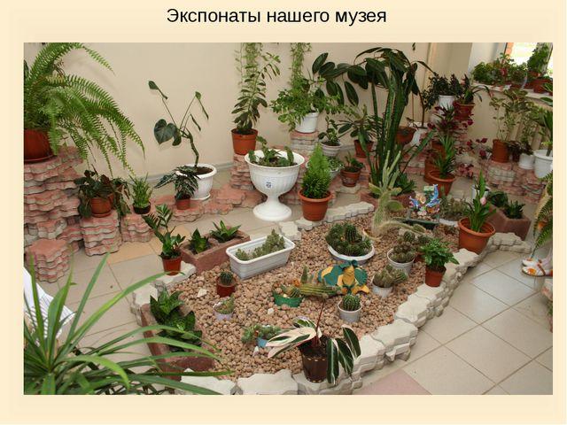 Экспонаты нашего музея