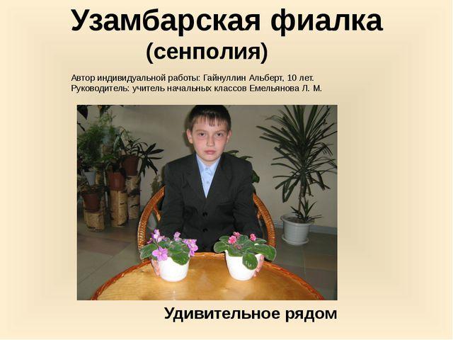 Узамбарская фиалка (сенполия) Автор индивидуальной работы: Гайнуллин Альберт,...
