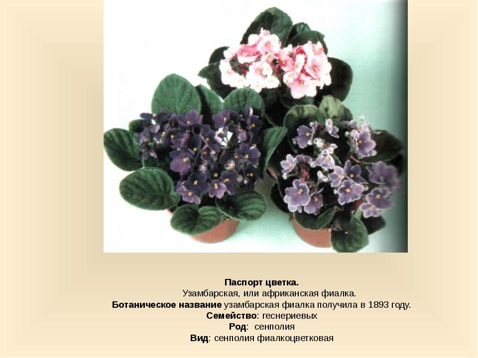 Паспорт цветка. Узамбарская, или африканская фиалка. Ботаническое название у...