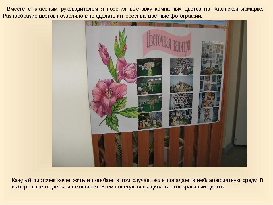 Вместе с классным руководителем я посетил выставку комнатных цветов на Казан...