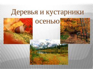 Деревья и кустарники осенью