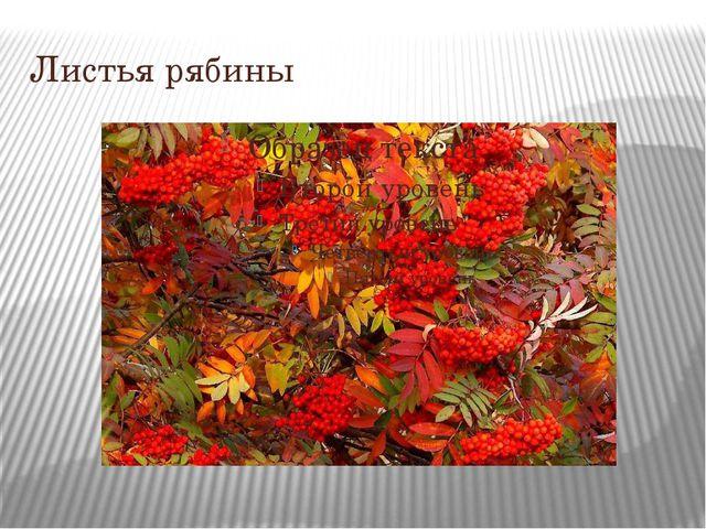 Листья рябины