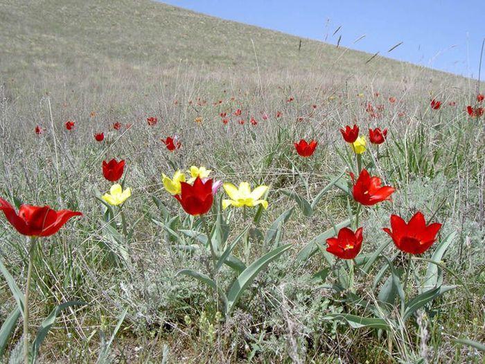 Астраханские степи фото - Фото цветов