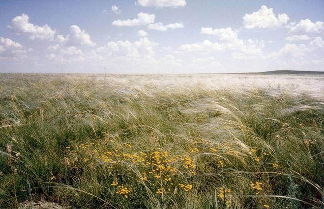 1. Сформировать представление о природной зоне степей; ознакомить с географическим положением зоны степей, её особенностями, жив