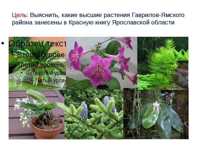 Цель: Выяснить, какие высшие растения Гаврилов-Ямского района занесены в Крас...
