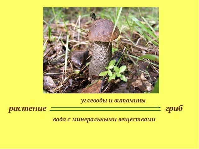растение гриб углеводы и витамины вода с минеральными веществами