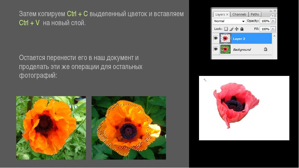 Затем копируем Ctrl + C выделенный цветок и вставляем Ctrl + V на новый слой...