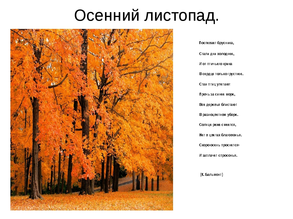 Осенний листопад. Поспевает брусника, Стали дни холоднее, И от птичье...
