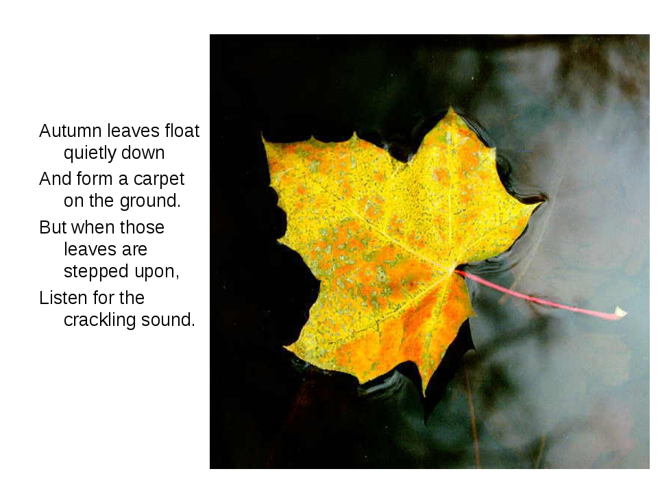 Autumn leaves float quietly down And form a carpet on the ground. But when th...