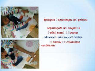 Венгрия ғалымдары жүргізген зерттеуде жұмыртқа қабығының құрамы адамның тісі