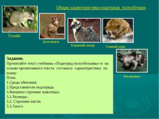 Общая характеристика подотряда полуобезьян Долгопяты Кошачий лемур Тонкий лор