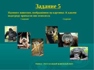 Назовите животное, изображённое на картинке. К какому подотряду приматов оно