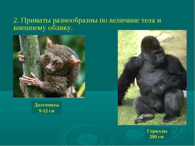 2. Приматы разнообразны по величине тела и внешнему облику. Долгопяты 9-12 см...