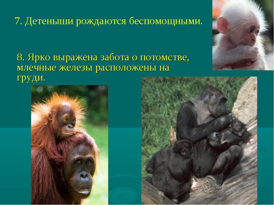 7. Детеныши рождаются беспомощными. 8. Ярко выражена забота о потомстве, млеч...