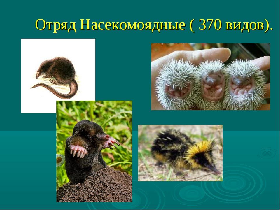 Отряд Насекомоядные ( 370 видов).