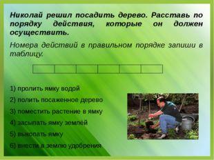 Николай решил посадить дерево. Расставь по порядку действия, которые он долже