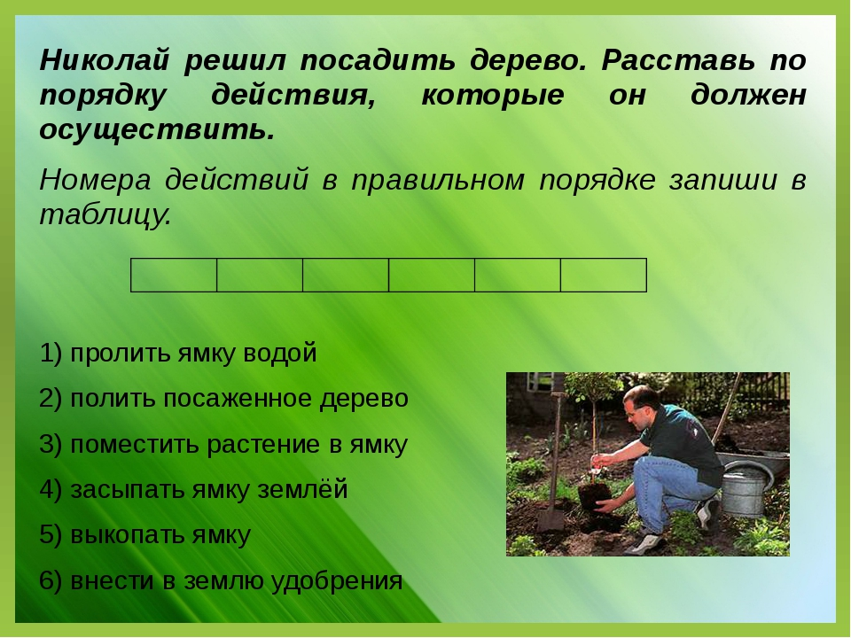 Николай решил посадить дерево. Расставь по порядку действия, которые он долже...