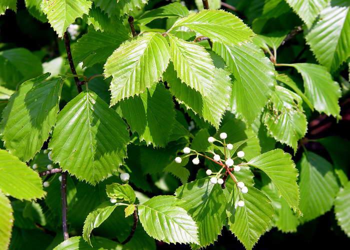 Магия дерева. . Лечебные и биоэнергетические свойства деревьев Флейты от Самдарши. . Магазин, уроки игры, мастер-классы, творчес