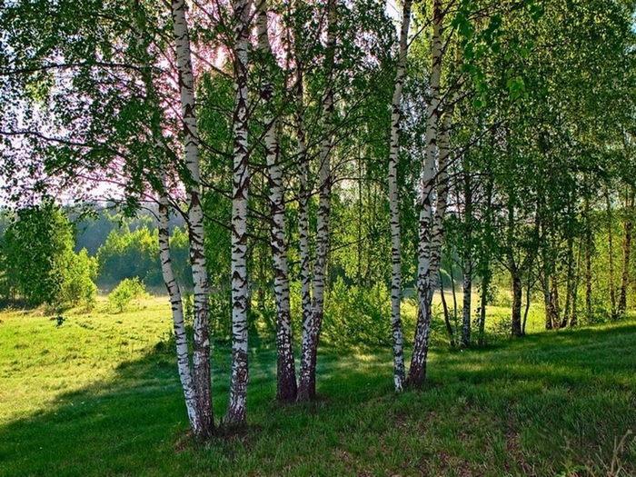 Gallery.ru / Фото #17 - Сказки русского леса (галерея фото) - rusich-VVM