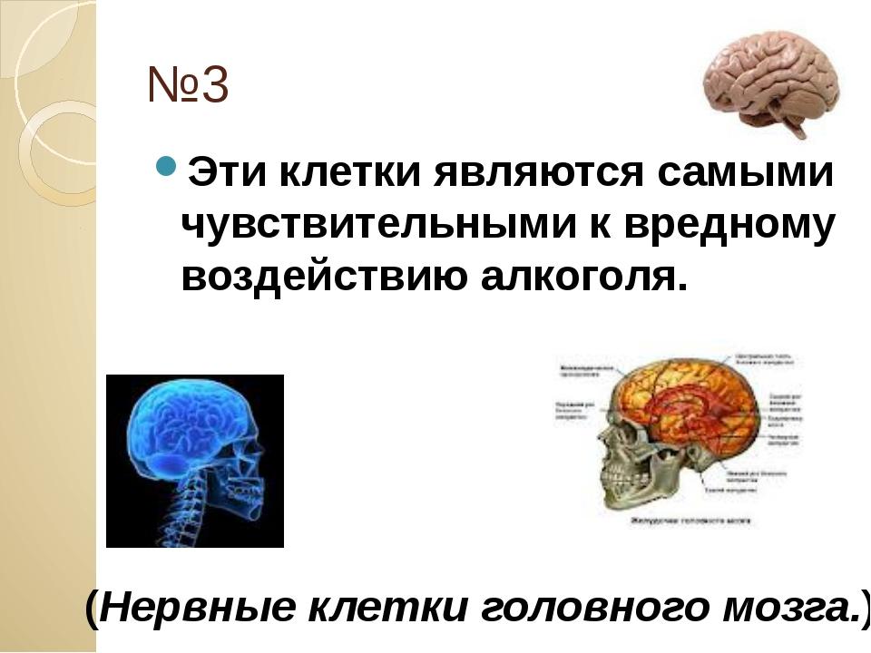 №3 Эти клетки являются самыми чувствительными к вредному воздействию алкоголя...
