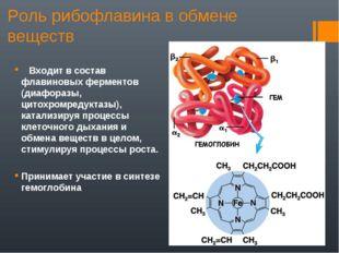 Роль рибофлавина в обмене веществ Входит в состав флавиновых ферментов (диафо