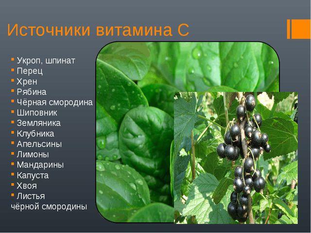 Источники витамина С Укроп, шпинат Перец Хрен Рябина Чёрная смородина Шиповни...