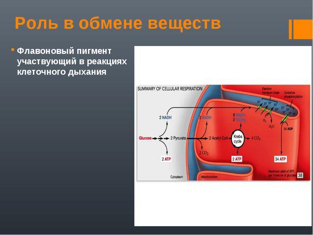 Роль в обмене веществ Флавоновый пигмент участвующий в реакциях клеточного ды...