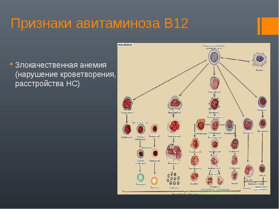 Признаки авитаминоза В12 Злокачественная анемия (нарушение кроветворения, рас...