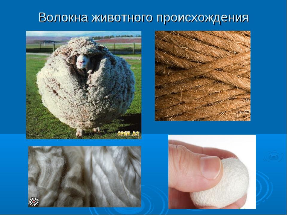 Волокна животного происхождения