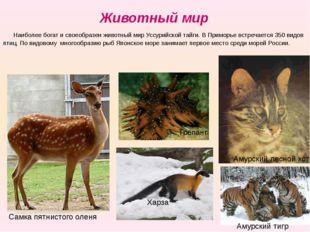 Животный мир Наиболее богат и своеобразен животный мир Уссурийской тайги. В