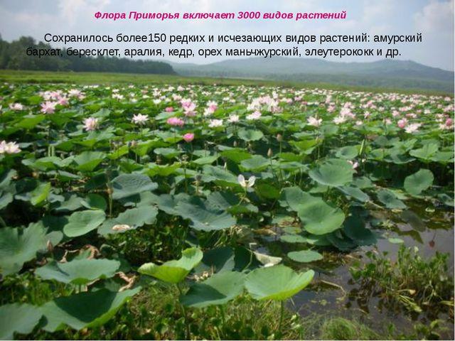 Флора Приморья включает 3000 видов растений Сохранилось более150 редких и ис...