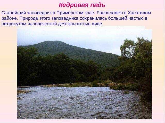 Кедровая падь Старейший заповедник в Приморском крае. Расположен в Хасанском...
