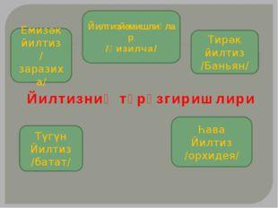 Йилтизниң түрөзгиришлири Йилтизйемишлиқлар /Қизилча/ Емизәк йилтиз /заразиха
