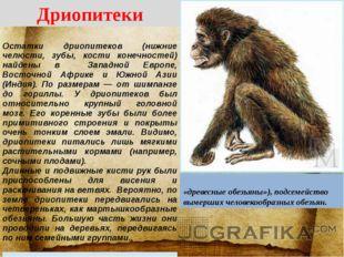 Дриопитеки ДРИОПИТЕ́КИ (Dryopithecinae, «древесные обезьяны»), подсемейство в