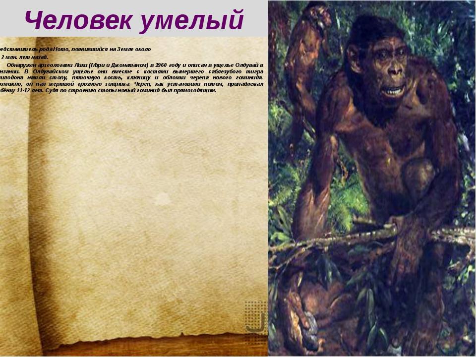 Челове́к уме́лый (лат.Homo habilis) — высокоразвитый австралопитек или перв...