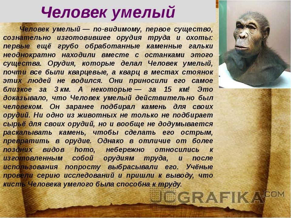 Человек умелый— по-видимому, первое существо, сознательно изготовившее оруд...