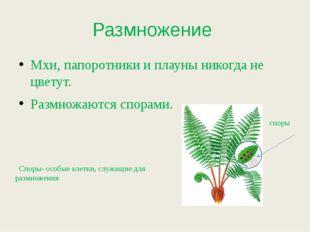 Размножение Мхи, папоротники и плауны никогда не цветут. Размножаются спорами