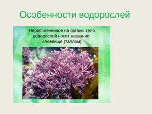 Особенности водорослей