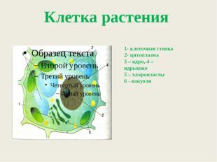 1- клеточная стенка 2- цитоплазма 3 – ядро, 4 – ядрышко 5 – хлоропласты 6 -
