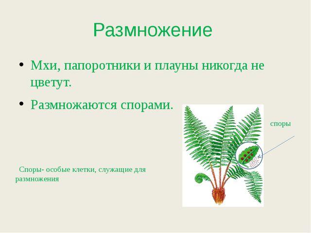 Размножение Мхи, папоротники и плауны никогда не цветут. Размножаются спорами...