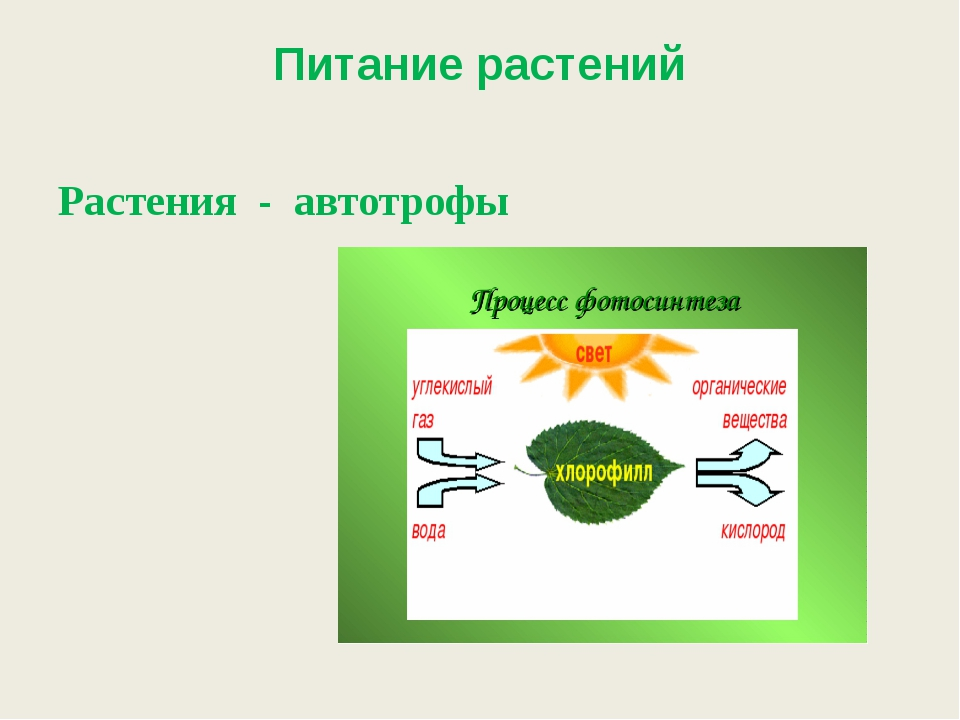 Питание растений Растения - автотрофы