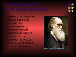 Учение Дарвина о естественном отборе. Дарвин утверждал, что каждое животное с